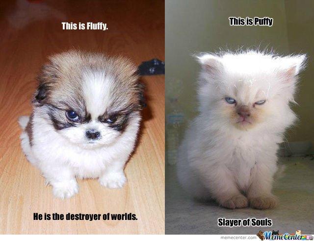 Fluffy Vs Puffy