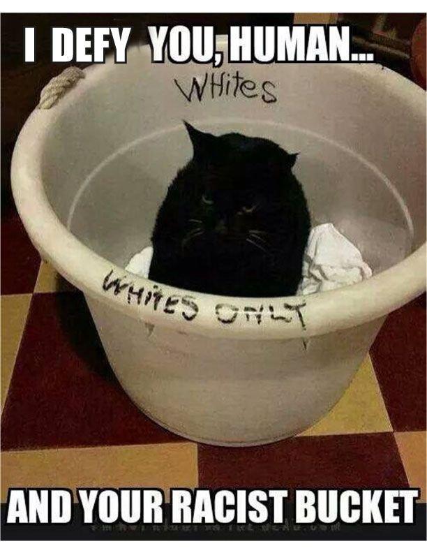 Funny Cats Haha Funny Cats Funny Sayings Humorous Cats Really Funny Memes