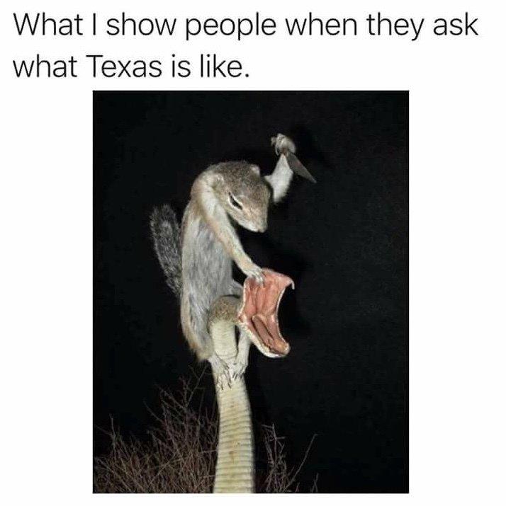 Texas is like meme