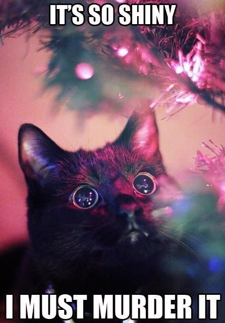 It is so shiny cats and christmas