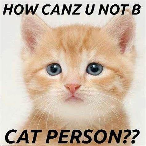 Funny Cat Memes 2014