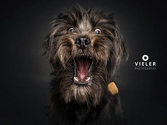 Looks like Chewbacca when you look quickly Funny Dog Funny Dogs Image