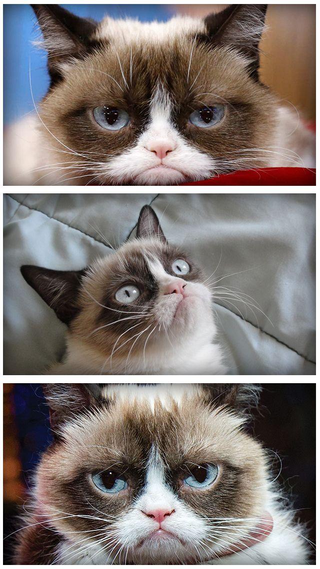 Grumpy Cat Meme Latest Fun ny Fat and Happy Cats mbs screenshot
