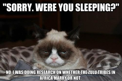 grumpy cat sleeping Funny Grumpy Cat Work