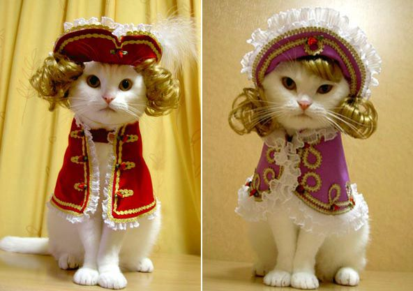Halloween costumes so I thought I d share some funny pictures The first one is a photo of my niece s cat Violet and the ones after that will make you