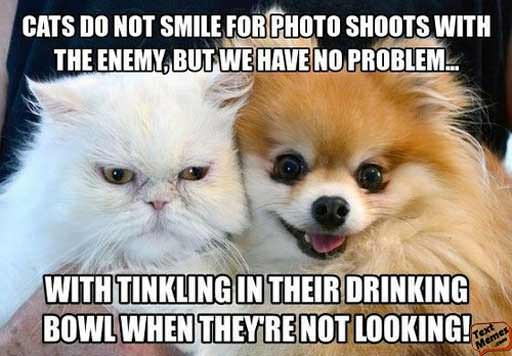 Cutest Dog and Cat Memes