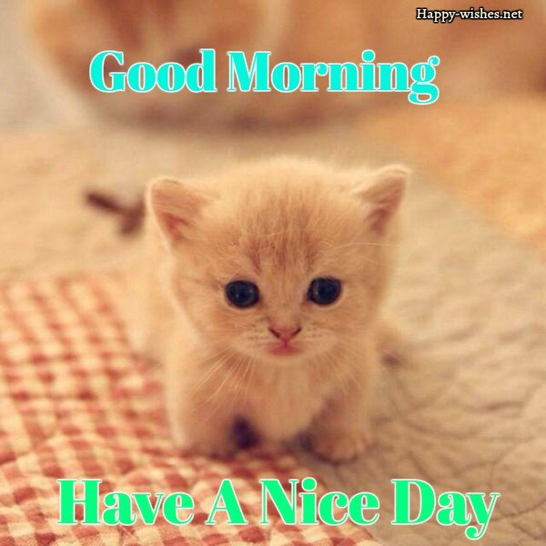 Good Morning Wishes For Cat Lovers