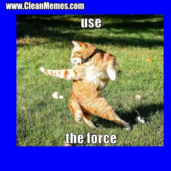in Cat Memes Clean Funny