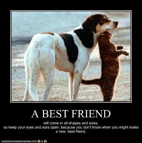 best friends cat dogs kittehs r owr friends motivational poster what breed