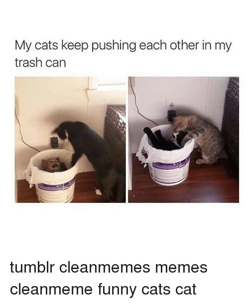 Memes 🤖 and Funny Cats My cats keep pushing each other in my
