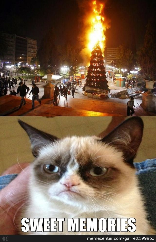 Grumpy Cat s Favorite Christmas Tradition
