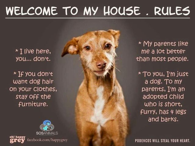 Dog house rules so true