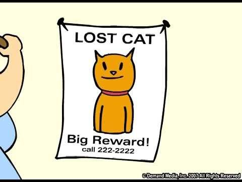 The Lost Cat Funny Cartoon