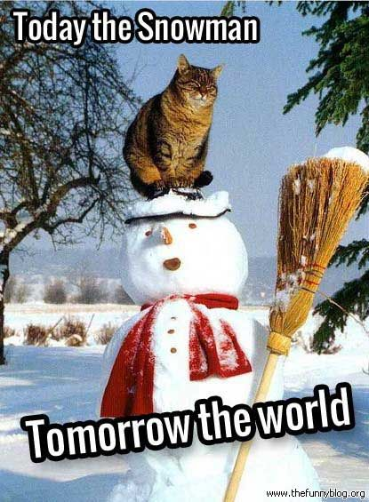 Catch the Beautiful Funny Cat Pictures In the Snow