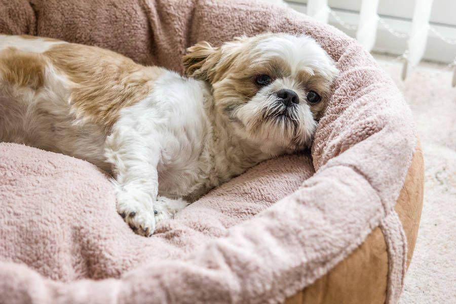 Wraparound Fleece Dog Bed Medium