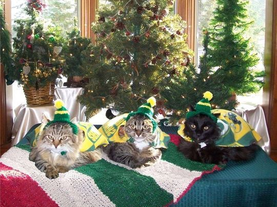 Colleen and James Sternitzky dress their cats Kitzu