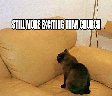 Funny Animal · Cat · Still more exciting than church