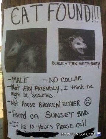Lovely Wampus Cat Funny Lol Lost Cat Sign About A Possum