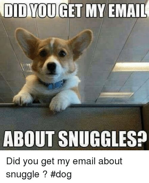 Memes Email and 🤖 OD YOU GET MY EMAIL ABOUT SNUGGLES Did you