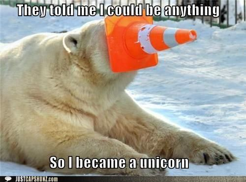 funny animal pictures funny animal memes they told me i could be anything
