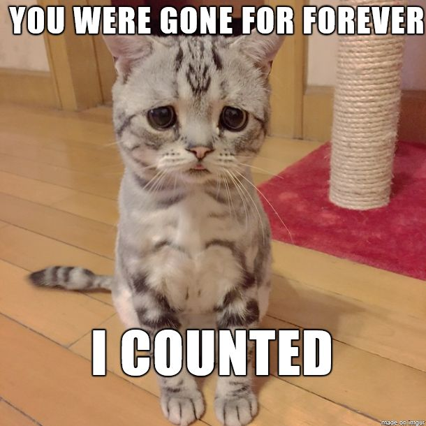 You Were Gone For Forever Funny Cat Meme