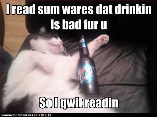 Funny pictures cat is drunk