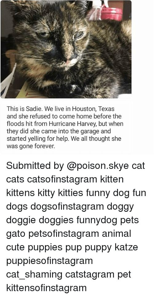 Cats Cute and Dogs This is Sa We live in Houston