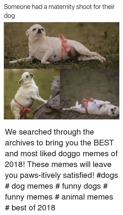 Dogs Funny and Memes Someone had a maternity shoot for their dog We