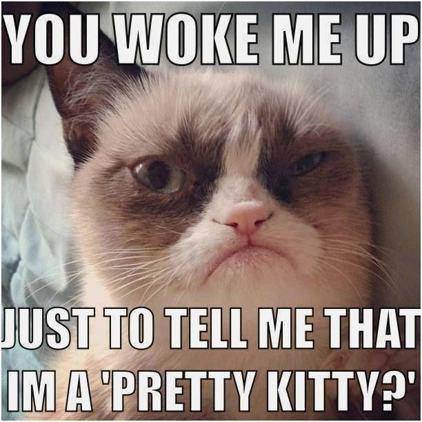 Funny grumpy cat grumpy cat jokes grumpy cat funny grumpy cat humor For more humor memes
