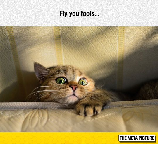 funny chair claws scared cat eyed
