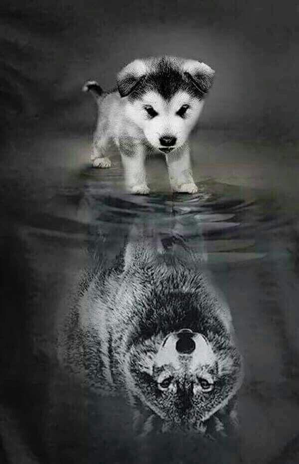 lo que vale siempre sera la forma en nos veamos nosotros mismos Wolf Funny