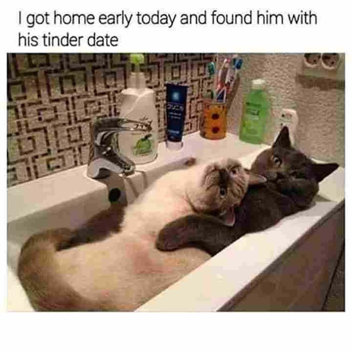 funny cat memes 31