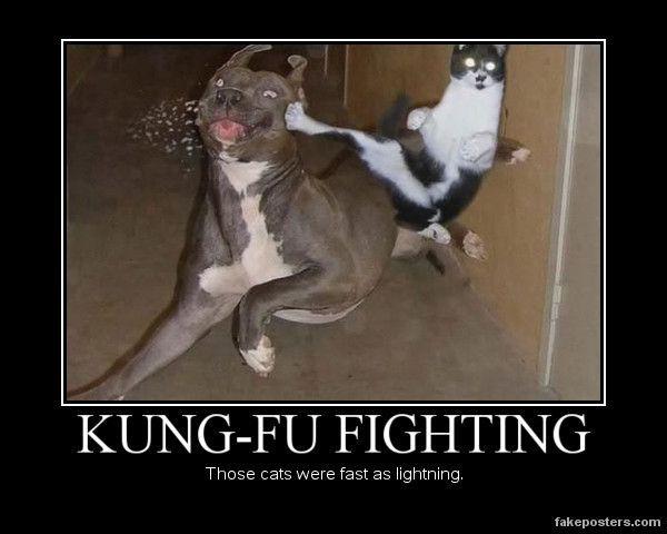 Kung fu Fighting Demotivational Poster