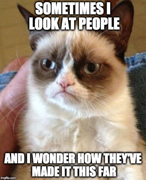 Top 30 Funny Cat Memes Funniest