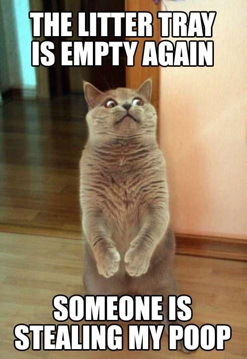 Funny Cat with Captions