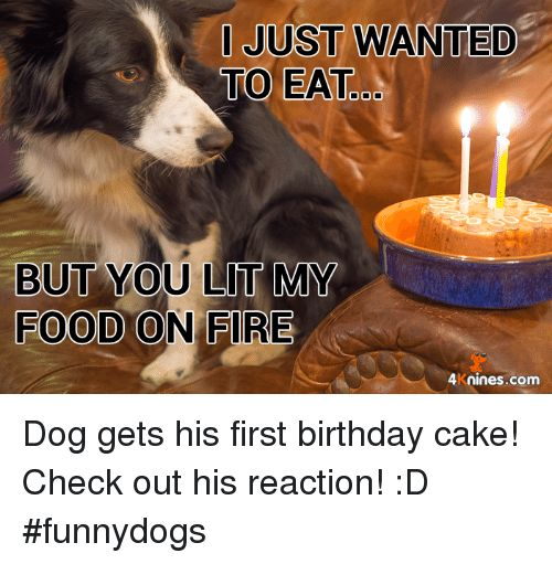 Memes Cake and 🤖 JUST WANTED TO EAT od BUT YOU LIT MY Dog s his first birthday