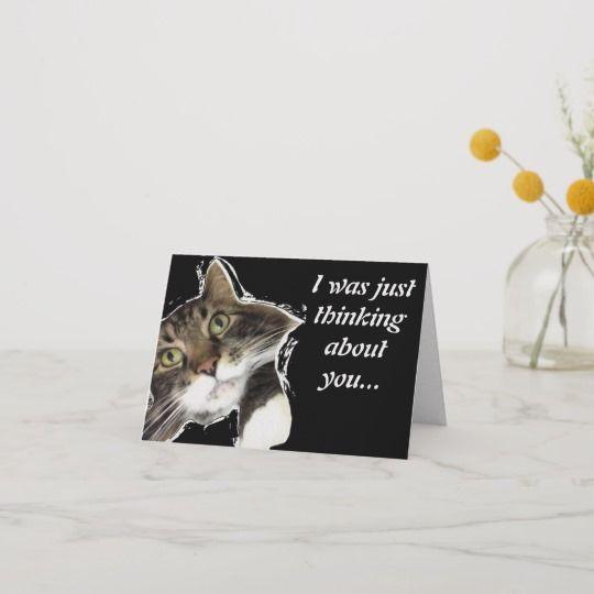 fluffy says hello funny cat note card w envelope r19e044e908d5424fb327d ea745f em0ci 540