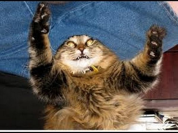 Scary cat showing its claws