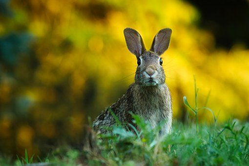 1 842 Free images of Rabbit