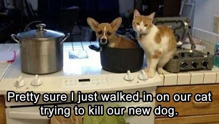 Catch the Marvelous Funny Animal Pictures Cats and Dogs