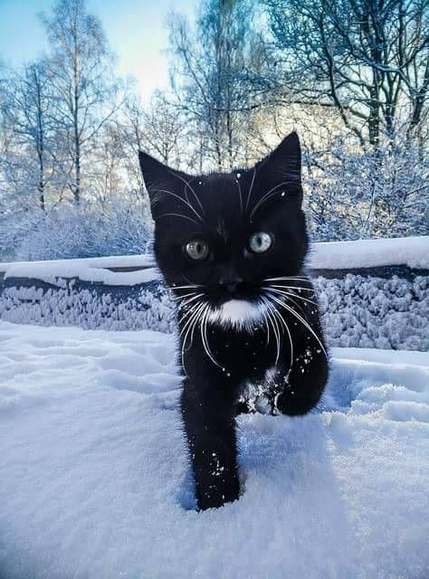 Istanbul lit up islamicarchitecture Funny Cats Funny Animals Cute Animals Winter Cat