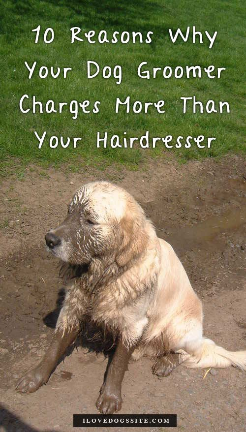 854c963cc5ce23f aa83e63d02 dog grooming tips grooming salon