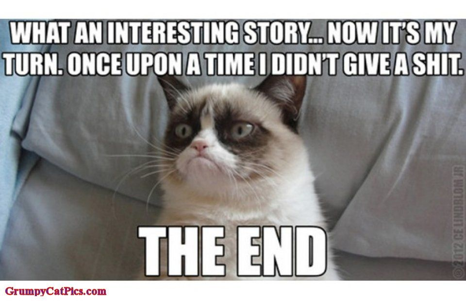 Catch the Marvelous Funny Grumpy Cat Memes Tumblr