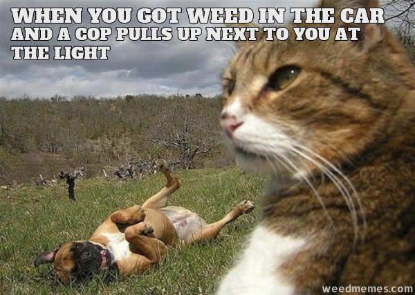 weed in car cop weedmemes