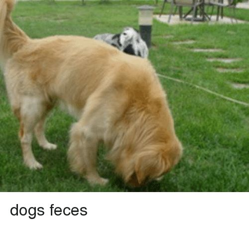 Dogs and Feces