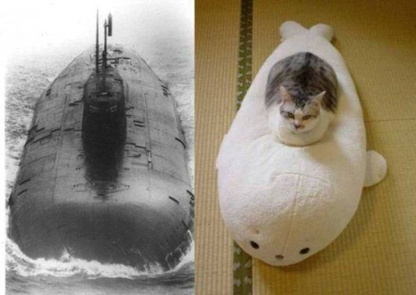Submarine Cat Design
