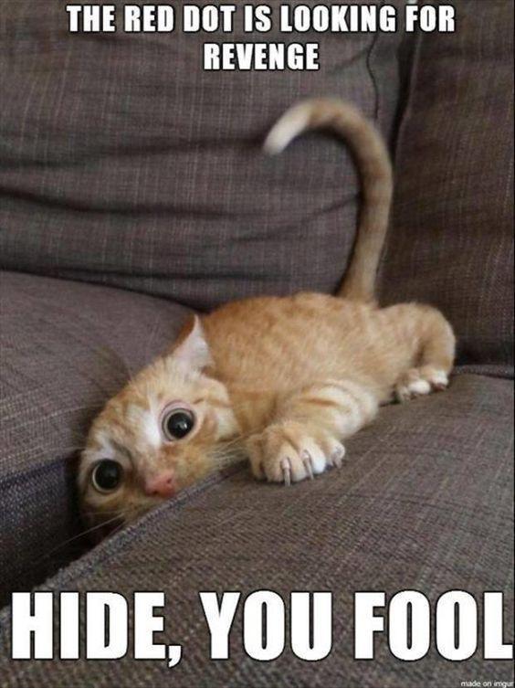 30 Funniest Cat Memes Funny Cats cat memes