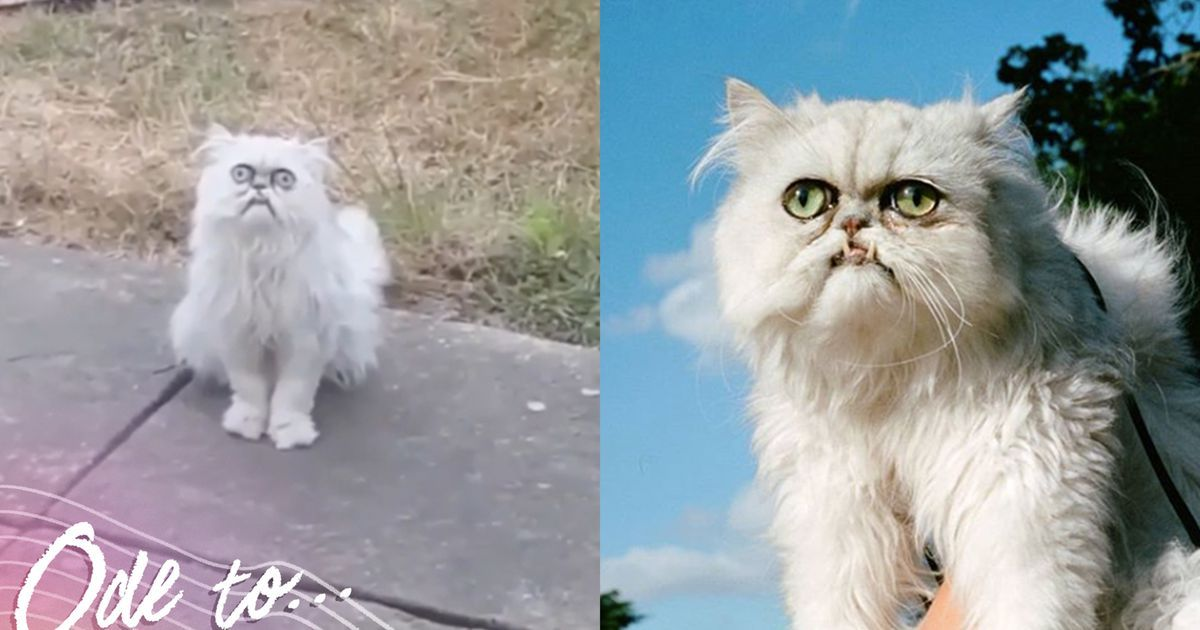 Let s all admire Wilfred Warrior the ridiculous looking Instagram famous cat