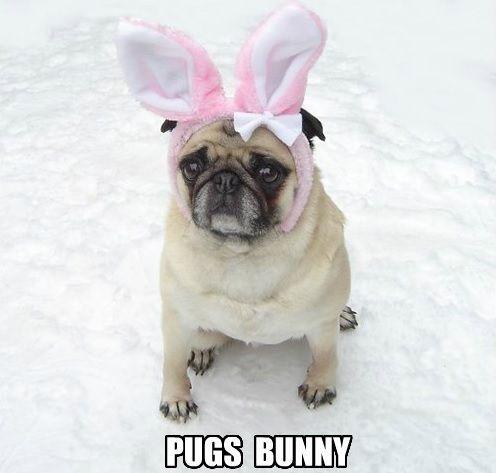 Funny Pug Dog Meme LOL FUNNY PUG DOG MEMES LOL Pinterest Pug