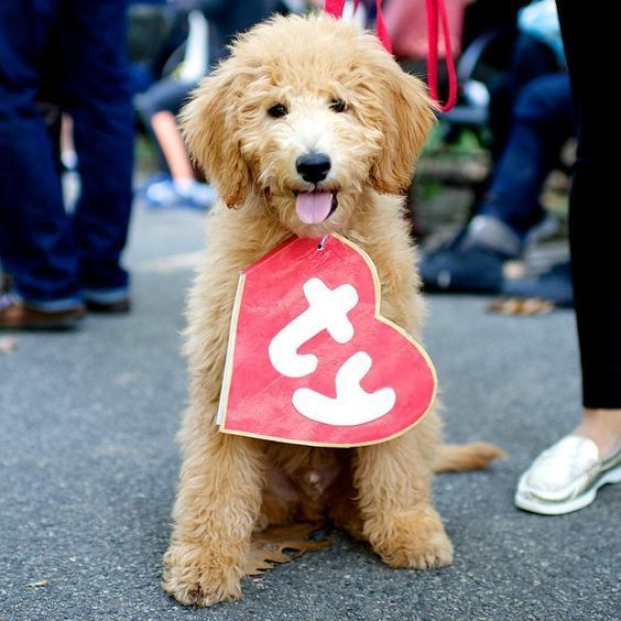 DIY TY Beanie Baby Halloween Dog Costume